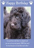 "Labradoodle-Happy Birthday - ""I'm Adopted"" Theme"
